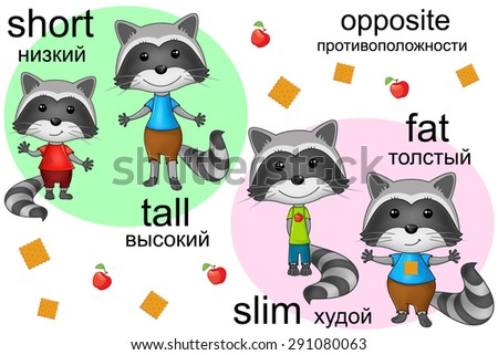Raccoon Set. opposite. Vector illustration cartoon.