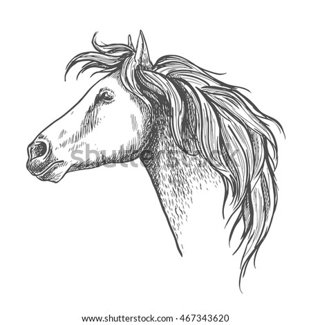 Racehorse head sketch icon with mare horse. Equestrian eventing symbol or horse racing design