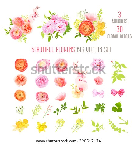 Ranunculus, rose, peony, narcissus, orchid flowers and decorative plants big vector collection. All elements are isolated and editable. - stock vector
