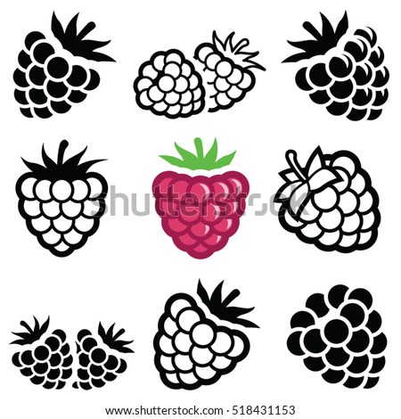 Raspberry Fruit Icon Collection Vector Outline Stock