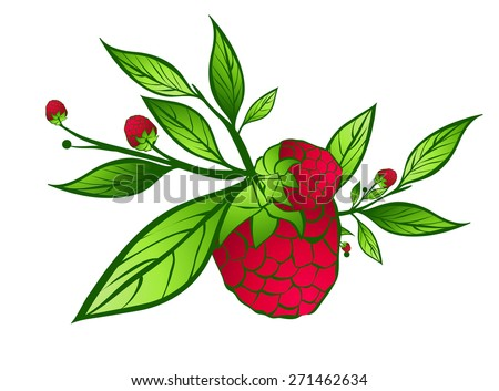 Raspberry With Green Leaves Over White Background - stock vector