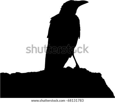 raven black silhouette - stock vector