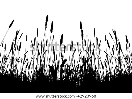 real grass vector silhouette / on white background - stock vector