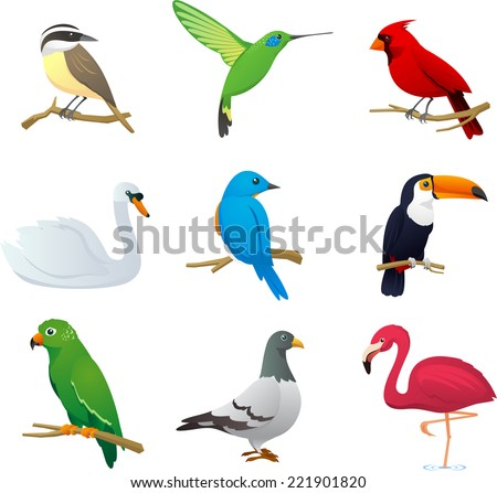 Realistic Bird species collection, with nine different bird species vector illustration.  - stock vector