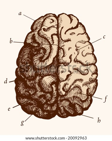 Realistic brain etching, old-fashioned, in easily editable vectors.