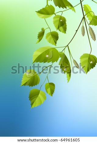 Realistic branch of birch - stock vector