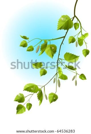 Realistic branch of birch isolated - stock vector