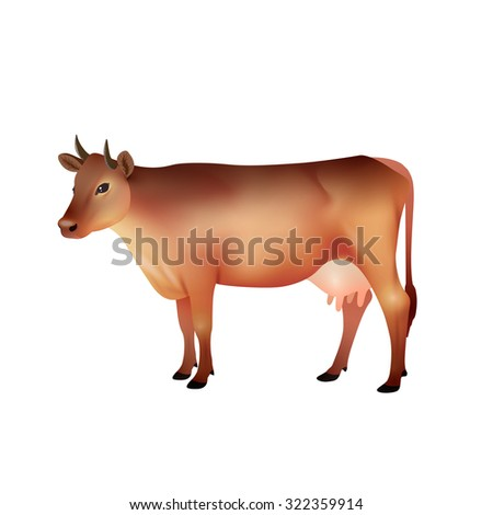 Realistic brown farm cow isolated on white background vector illustration - stock vector
