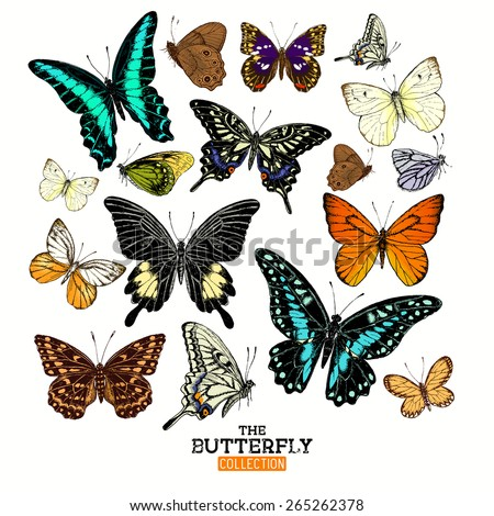 Realistic Butterfly Collection. A set of butterflies, hand crafted vector illustration. - stock vector