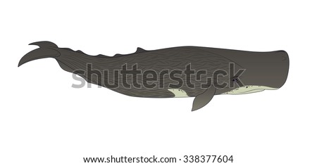 Realistic Cachalot or Sperm Whale on a White Background. Vector Illustration of Sperm Whale in Simple Realistic Style. Marine Mammal - Sperm Whale or Cachalot. Realistic Sperm Whale or Cachalot. - stock vector