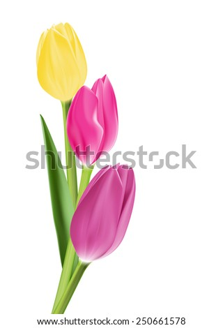 Realistic Colorful Tulips in Isolated Background. Editable Vector Illustration - stock vector
