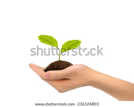 realistic hand holding plant isolated on white background