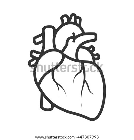 Realistic heart icon isolated on white background vector medical heart logo line art of