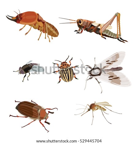 realistic icons insects