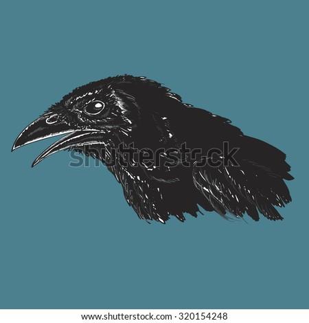 Realistic illustration of black crow - stock vector