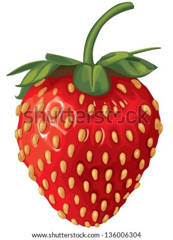 Realistic image of delicious ripe strawberries - stock vector