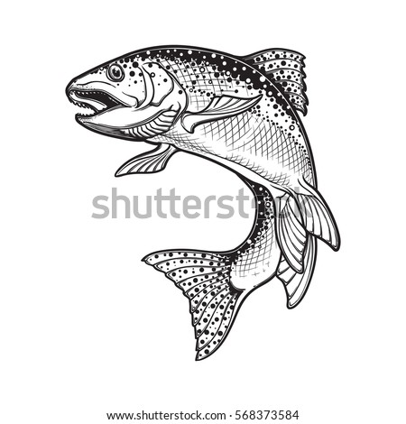 Realistic Intricate Drawing Of The Rainbow Trout Jumping Out Black And White Sketch Isolated On