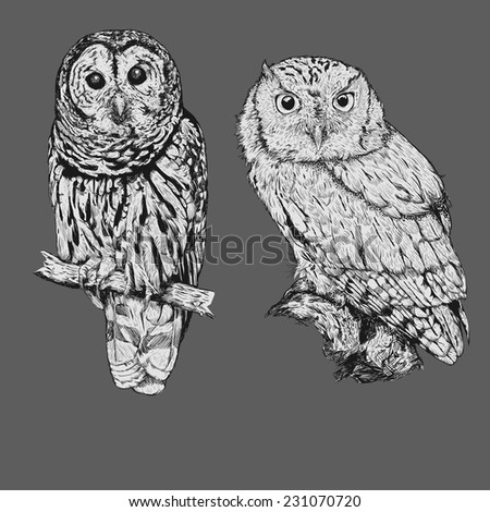 Realistic line drawing of two owl bird - stock vector