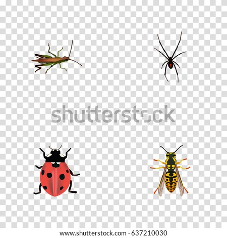 locust stock vectors images  vector art  shutterstock
