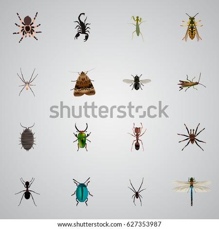 Term paper on locusts