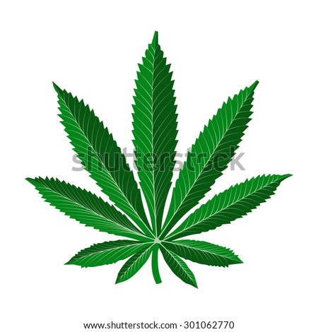 realistic marijuana leaf - stock vector