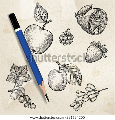 Realistic Pencil Sketch of various fruits and berries in vector. - stock vector
