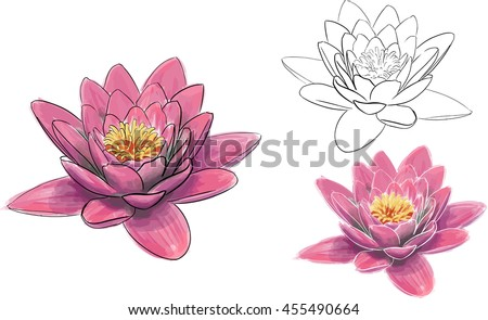 Realistic Pink Lotus Flower Watercolour Aquarelle Vector Line Drawing