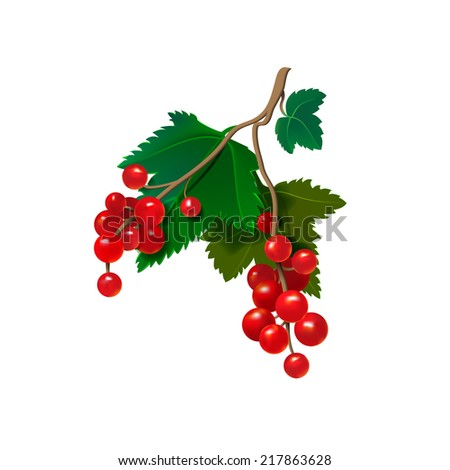 Realistic red currants on a white background. Vector illustration - stock vector