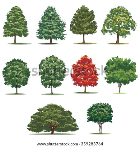 Realistic trees pack. Isolated vector trees on white background. - stock vector