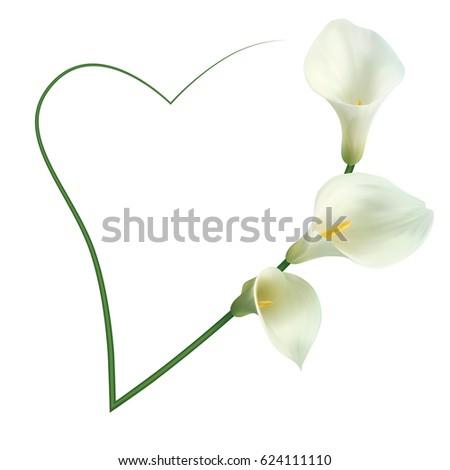 Realistic White Calla Lily Romantic Frame Stock Vector 624111110 ...