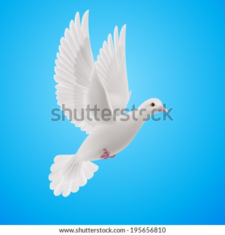 Realistic white dove flying on blue sky background. Symbol of peace