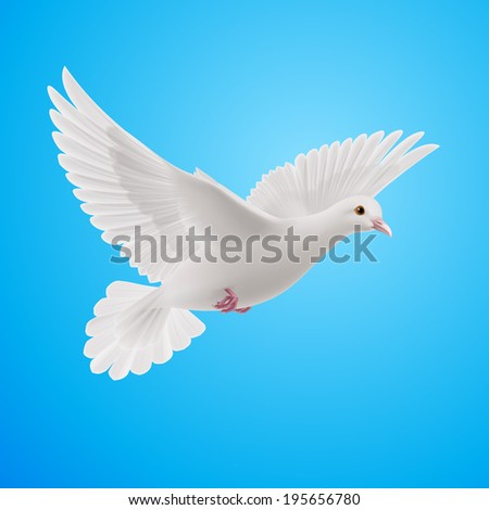 Realistic white dove on blue sky background. Symbol of peace