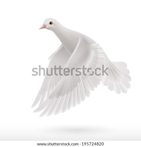 Realistic white dove on white background as symbol of peace - stock vector