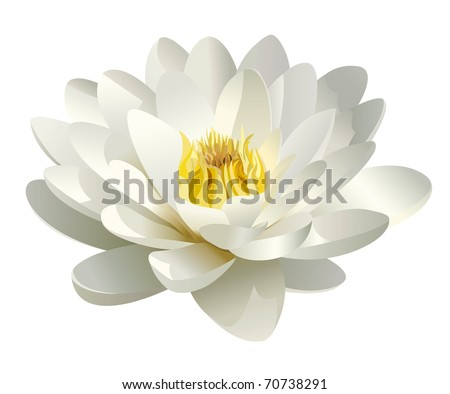 realistic white water lily vector - stock vector
