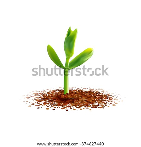 Realistic Young sprout illustration. Spring seedling. Green plant growth at the soil. Agriculture, ecology, new life and spring concept. Growth bob sprout. - stock vector