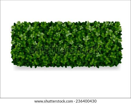 rectangular boxwood shrubs, green fence - stock vector
