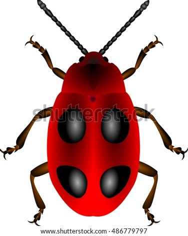 Red beetle with black spots on white
