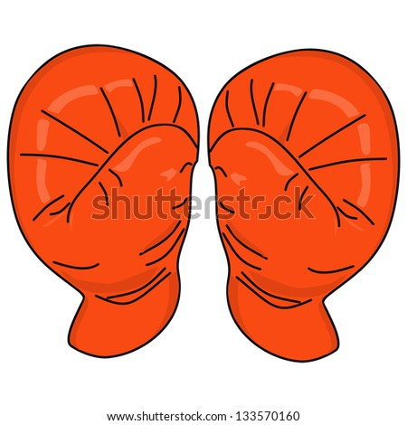 Red Boxing gloves vector - stock vector