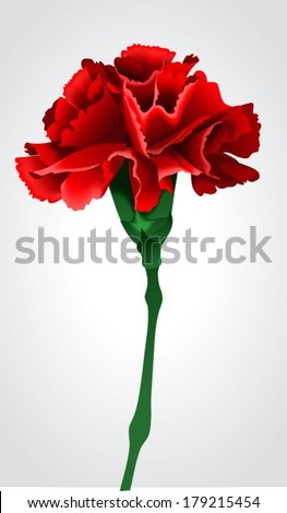 Red carnation on a gray background - stock vector