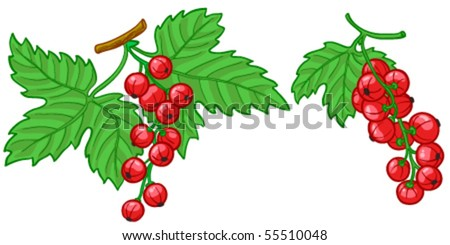 Red currant with green leaves - stock vector