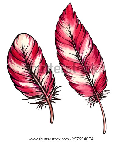 red feather isolated - stock vector