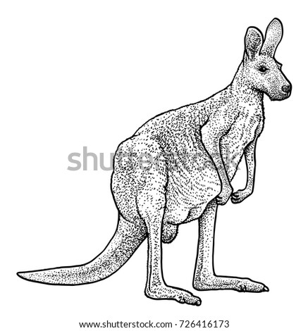 Q Significa Kangaroo Male Kangaroo Stock Im...