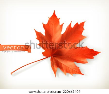 Red maple leaf, vector object - stock vector