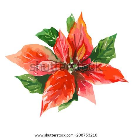 Red Poinsettia (Bethlehem Star) - stock vector