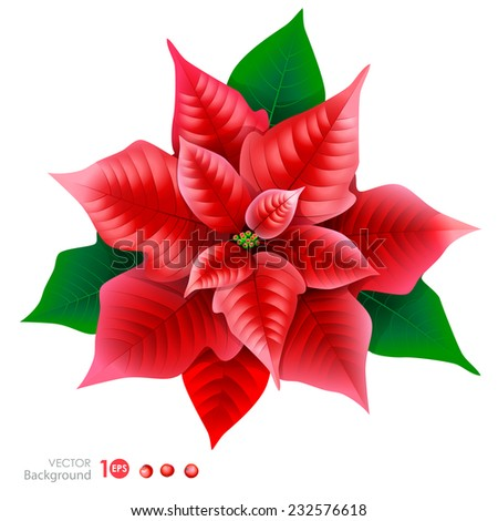 Red poinsettia. Vector  EPS 10. - stock vector
