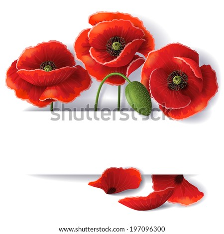 Red poppy flowers with space for text. - stock vector