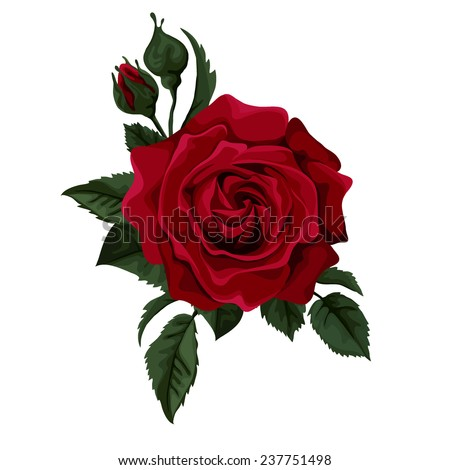 Red rose isolated on white with leaves. Perfect for background greeting cards and invitations of the wedding, birthday, Valentine's Day, Mother's Day. - stock vector