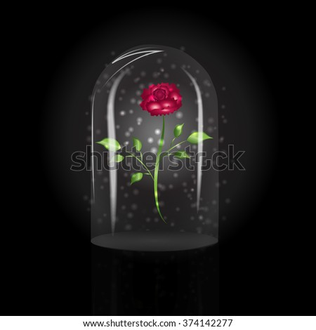 Glass dome stock images royalty free images vectors for Rose under glass