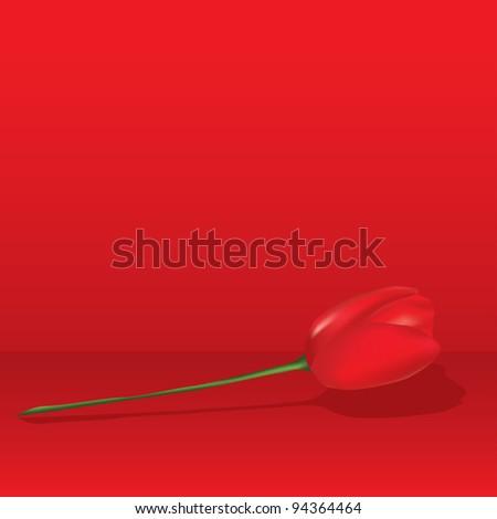 Red tulip. Vector illustration