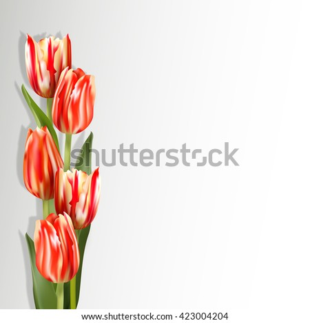 Red tulips on a light background with shadow. Motley red flowers on the left side of card. The template for the congratulations for the various greetings.